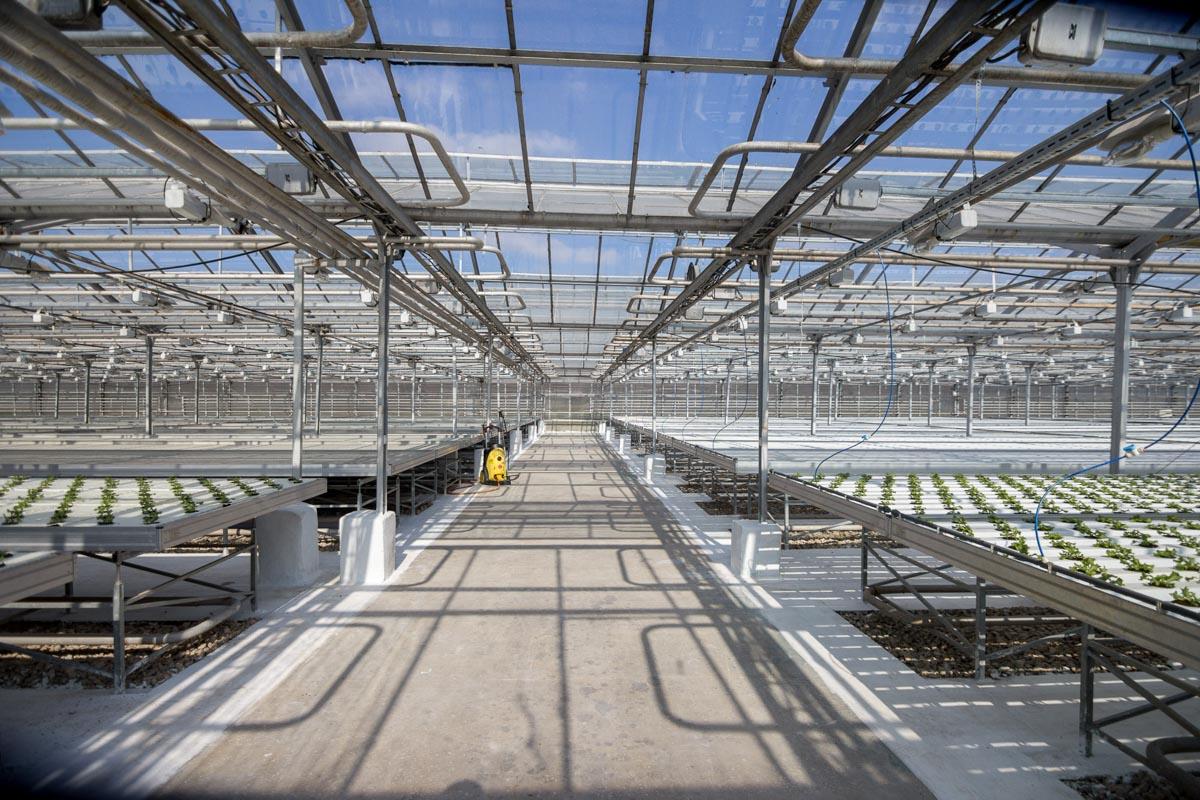 Самарские теплицы. Как выращивают овощи для наших магазинов © Техномод